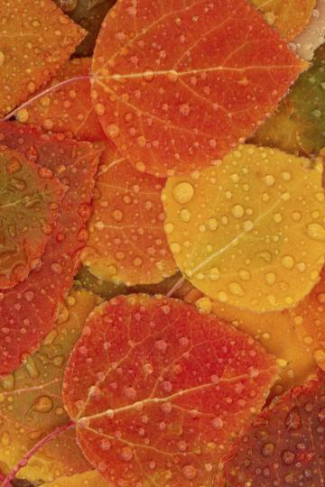 Autumn Leaves iPhone 4s Wallpaper Download iPhone Wallpapers iPad