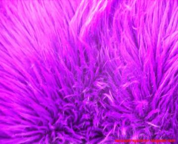 Purple Fur Wallpaper Wallpapers Gallery