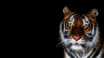 Animals Wallpapers HD Widescreen Desktop Backgrounds 1920x1080