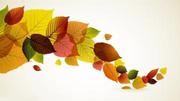 Autumn leaves wallpaper   661443
