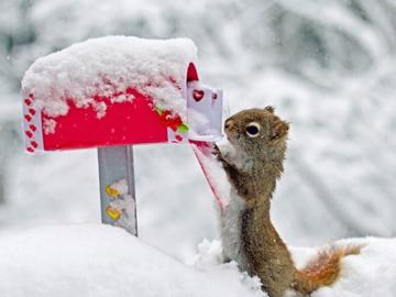 Wallpapers Download Funny Animals Wallpapers