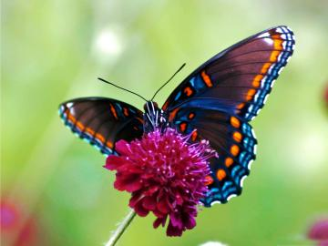 colorful butterfly desktop wallpaper download colorful butterfly