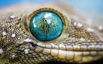 Beautiful Animals Wallpapers HD Desktop Widescreen Download