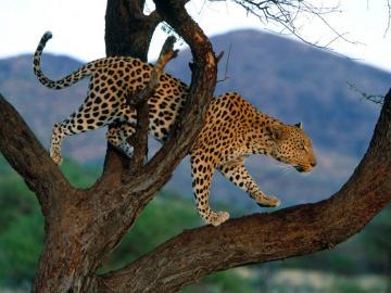 Wallpapers Desktop Wallpapers Amazing Wildlife Wallpapers