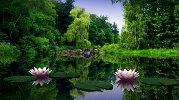 Download Green Nature Wallpaper 1600x900 Wallpoper 389759