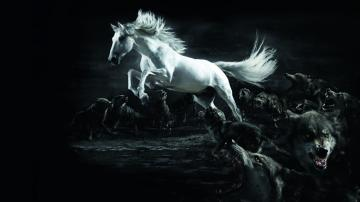 White Horse Wolf Wallpapers HD Wallpaper 3D Abstract Wallpapers