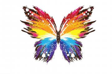 Colorful Butterfly Wallpapers 20 Background Wallpaper   Hivewallpaper