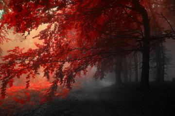 4K wallpaper   Nature   trees autumn red gray   4288x2848