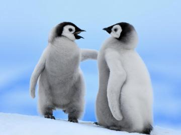 Lovely Wallpapers Penguin Birds Cute Wallpapers