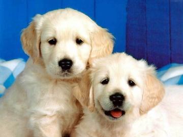 Puppies 3 dogs 1993812 1024 768jpg