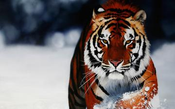 sources animal wallpaper animal wallpapers animal desktop animal