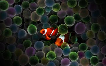 Circus Clown Fish by rebstile