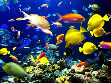 Android Live Fish Wallpaper 1600x1200 Full HD Wallpapers