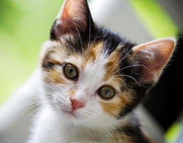 Cute Cat WallPapers Download Beautiful Cats Desktop HD