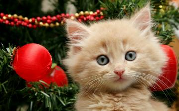 cats cats animals christmas kittens christmas tree 2560x1600 wallpaper
