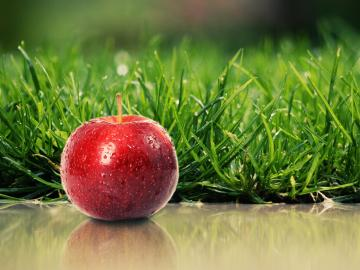 Fruit Nature Wallpapers HD wallpapers   Freh Fruit Nature Wallpapers