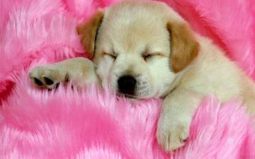 Cute Animals Desktop Wallpapers for HD Widescreen and Mobile