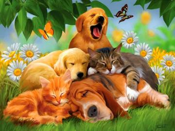 Cool Animals Dogs Cats Desktop HD Wallpaper   Stylish HD Wallpapers
