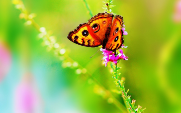 Bright Colorful Butterfly Wallpaper   Wallpaper 37385