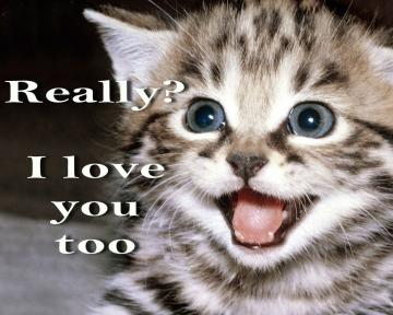 meme quote funny humor grumpy kitten mood love wallpaper background