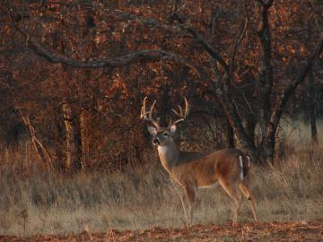Deer Hunting Forums Thread Cool Pics Age And Desktop Wallpaper
