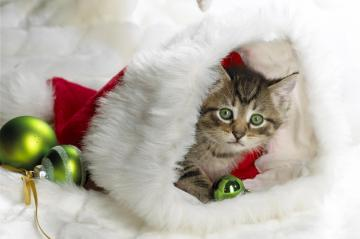 Cute Animal Christmas Wallpaper 7894 Hd Wallpapers in Celebrations