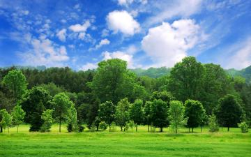 Green Summer Trees Desktop Wallpaper Background Desktop Wallpaper