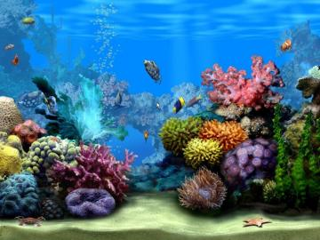 living marine aquarium 2 screensaver screensaver aquarium fish video