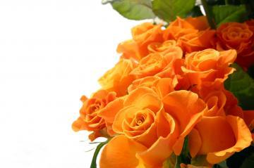 Orange Flowers Wallpapers