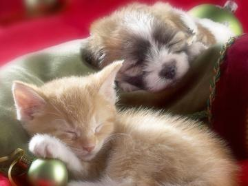 cat dog Christmas Animals Other HD Desktop Wallpaper