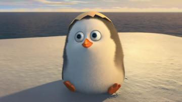 The Penguins of Madagascar Movie 2014 Cute Baby Penguin Wallpaper