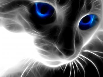 Backgrounds Animals Wallpapers Animals Desktop Backgrounds