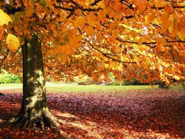 AS CORES DO OUTONO   Imagens fantsticas do Outono Curiosos No