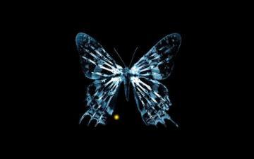 Widescreen Fringe Butterfly