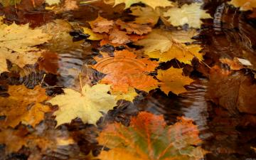 Autumn hd wallpapers Page 0 WallpaperLepi