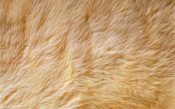 Cristian Wallpaper Fur wallpaper fur fabric cheap wallpaper