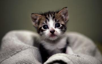 Cute Kitten Wallpaper The Desktop Wallpaper