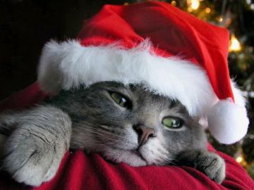 funny christmas animals Amazing Wallpapers