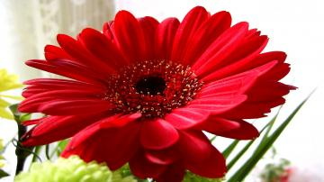 Nature Flowers Wallpaper 1920x1080 Nature Flowers Red Flowers