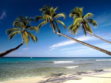 Caribbean beach wallpaper The Images