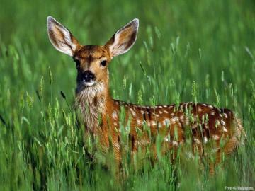 Download Wallpapers Wild Animals Wallpapers