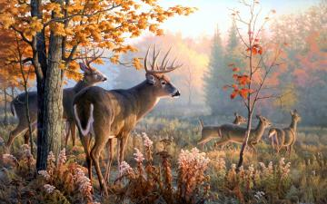 Wallpaper wallpaper Deer Art Wallpaper hd wallpaper background
