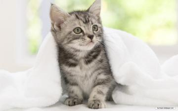 Cute Animal Desktop Backgrounds Desktop Image
