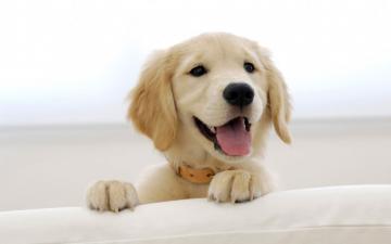 best top desktop dog wallpapers 57 hd dog wallpaper picture imagejpg