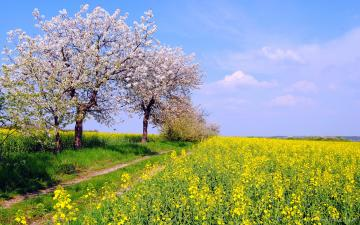 spring widescreen wallpaper which is under the spring wallpapers