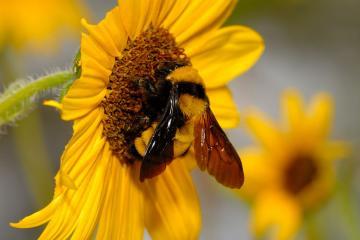 bee bumble bee bumble bee bumble bee bumble bee bumble bee bumble bee