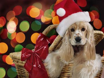Wallpapers Club christmas animals wallpapers