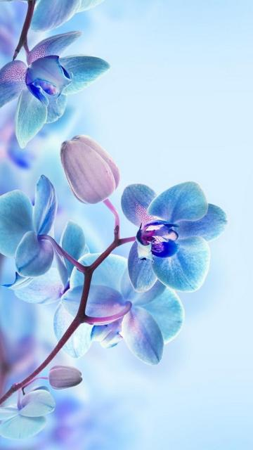 3D Flower HD Wallpapers For Mobile 2020 Cute Wallpapers