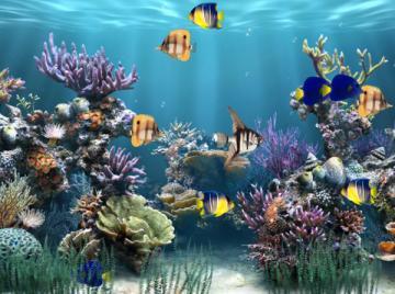 fantezie boutique animated desktop wallpaper 3D Animated Wallpapers