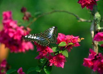 Flowers butterfly natural beauty desktop wallpapers
